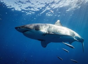 scary shark facts