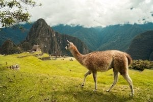 fun facts about Machu Picchu
