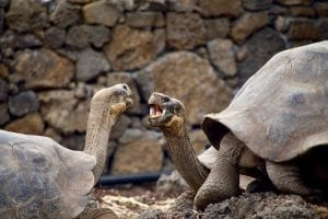 Facts about Galápagos Islands