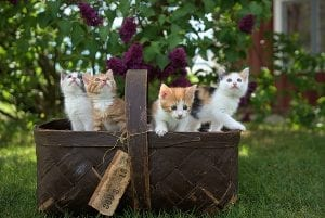 facts about kittens