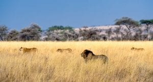facts about the serengeti