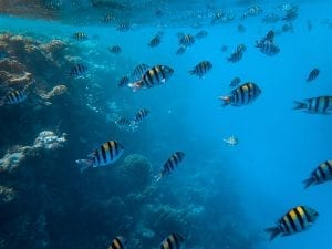 fun facts about the red sea