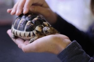 fun facts about tortoises