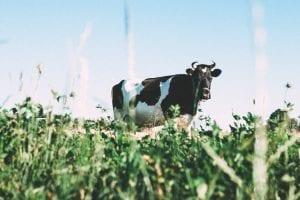 nutrition facts on milk