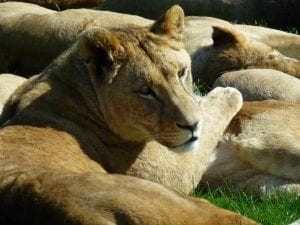 Longleat Safari Park Facts