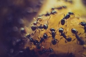 interesting facts about ants
