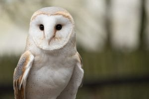 interesting facts about owls