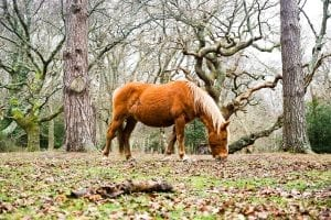 New Forest Facts