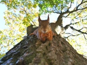 fun facts about squirrels