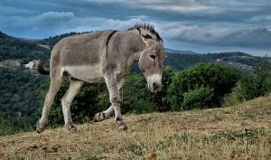 Facts about Donkeys