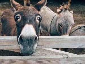 Fun Donkey Facts