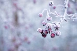 Winter facts