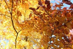 interesting facts about October